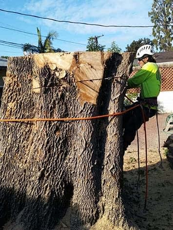 Tree Trimming Burbank CA