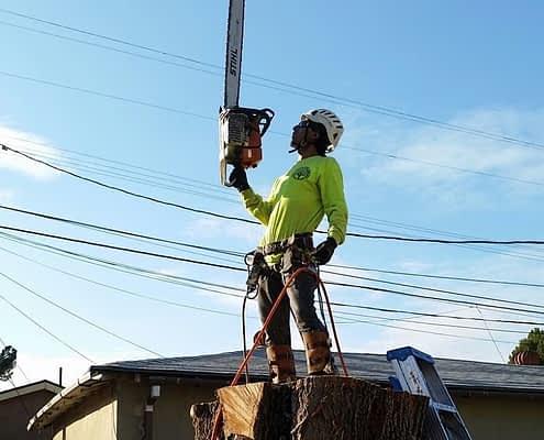 Tree Service Burbank CA
