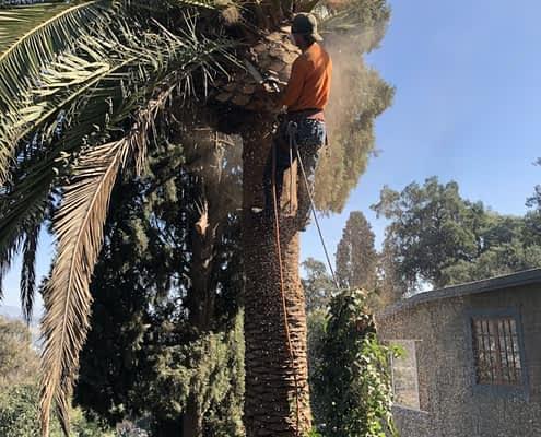 Tree Service Highland Park CA