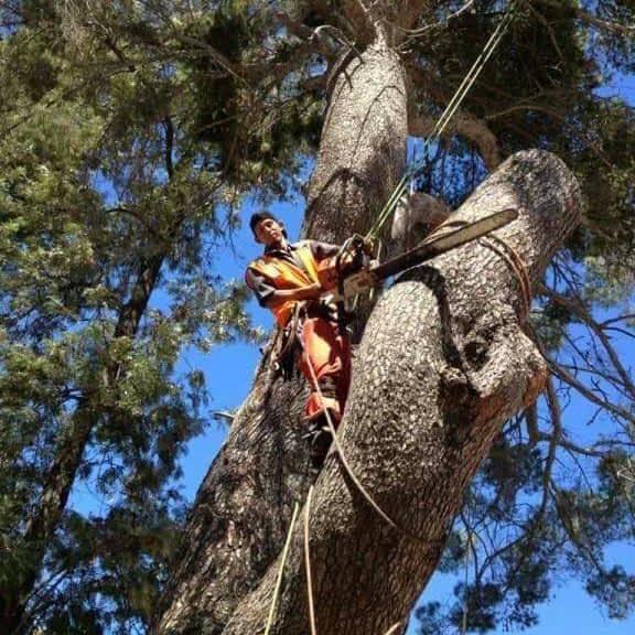 Tree Service Glendale CA