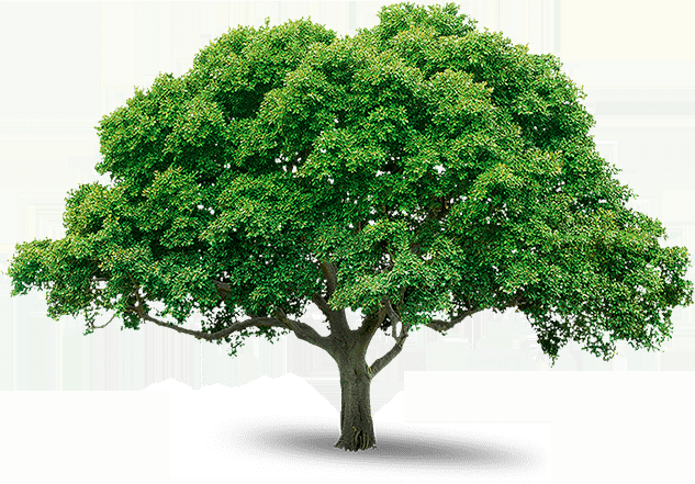 Tree Trimming Los Angeles CA