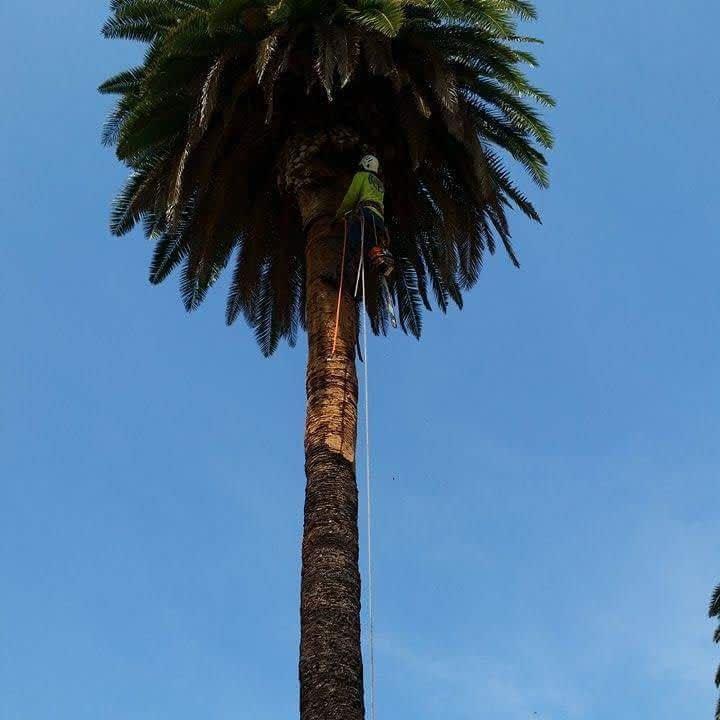 Tree Trimming Glendale CA